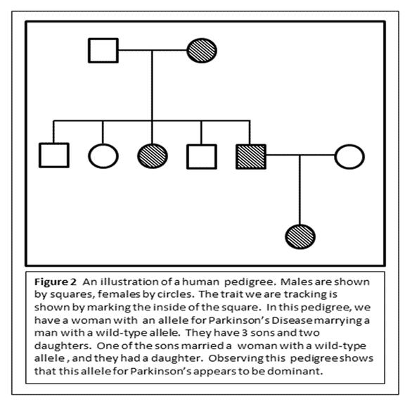Human Pedigree Chart
